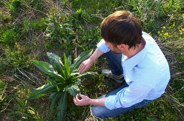Mit geschulten Auge betrachtet und beobachtet der staatlich geprüfter Technologe für Pflanzenbau seine Naturschutzflächen.
